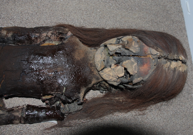 Climate Change and the Chinchorro Mummies